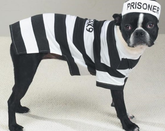 prisoner-dog-halloween-costume-casual-canine-1