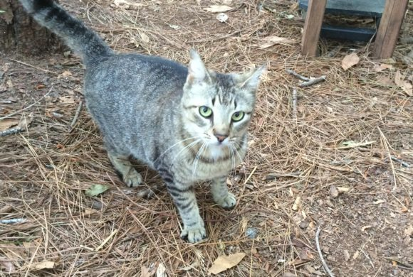 Residents care for Bluffton's forgotten cats
